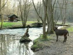 Ane et cabane purnodois
