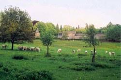 Prairie du chateau