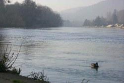 La Meuse et l'ile de Godinne